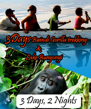 3 Days Bwindi Gorilla tracking and Lake Bunyonyi