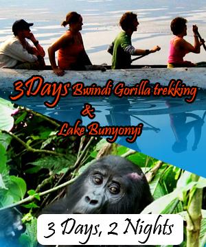 3 Days Bwindi Gorilla tracking and Lake Bunyonyi