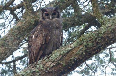 7_Days_Birding_Uganda_Safari
