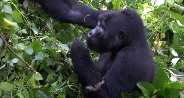 3 Days Gorilla Tracking Bwindi, Lake Bunyonyi
