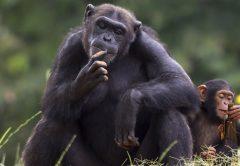 Entebbe Zoo Uganda Wildlife