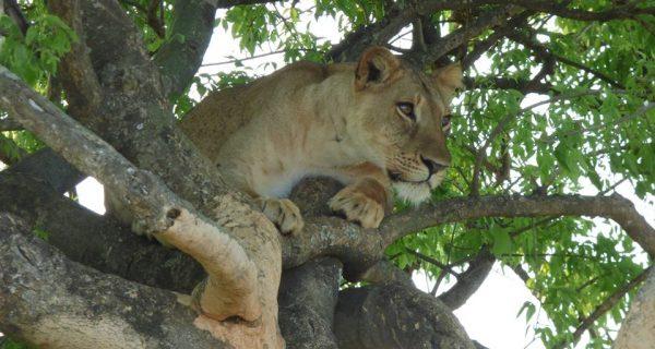 2 days queen Elizabeth national park Uganda Safari
