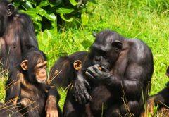 3 Days Kibale National Park Uganda Safari