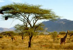 3 days Samburu National Reserve flying Safari