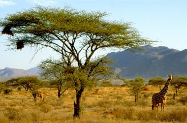 3 days Samburu National Reserve flying Safari