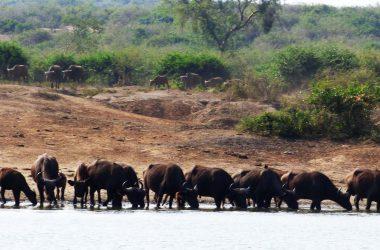 5 Days Bwindi, Lake Bunyonyi and Lake Mburo