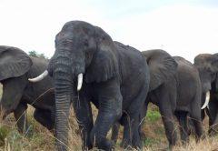 5 days Amboseli National Park and Tsavo National Park Kenya Safari