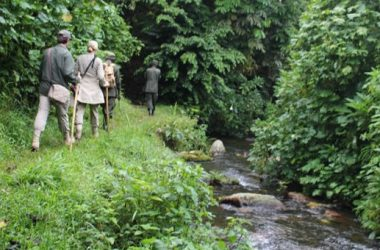 Bwindi Nature Walks Starting from Nkuringo/ Buhoma
