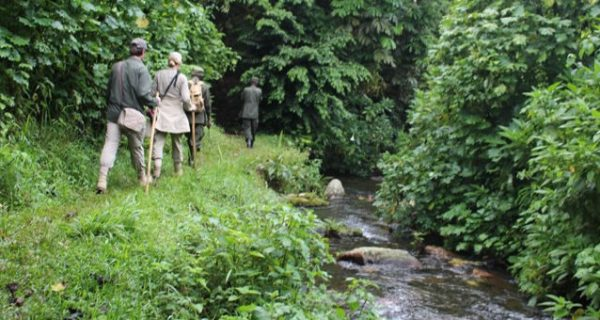 Bwindi Nature Walks Starting from Nkuringo/ Buhoma