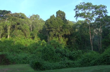 Maramagambo Forest Safari in Uganda - Queen Elizabeth National Park