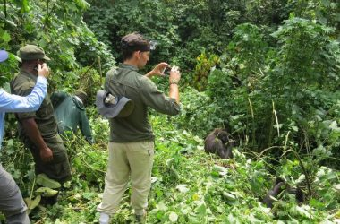 Mountain Gorilla Tracking Mgahinga National Park