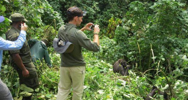 Mountain Gorilla Tracking Mgahinga National Park