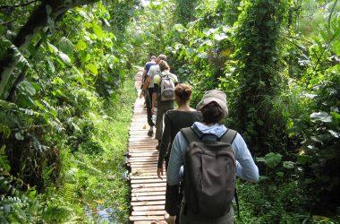 Rushaga Gorilla Tracking Uganda