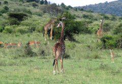 5 days holiday Kenya safari