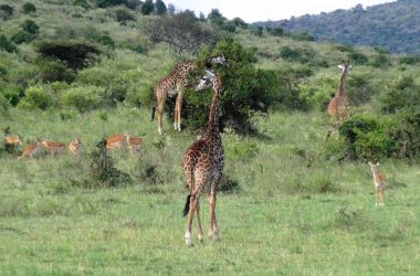 5 days holiday Kenya safari
