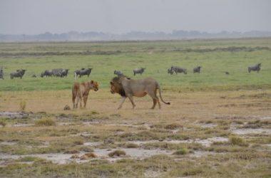 Amboseli National Park Kenya holiday destination