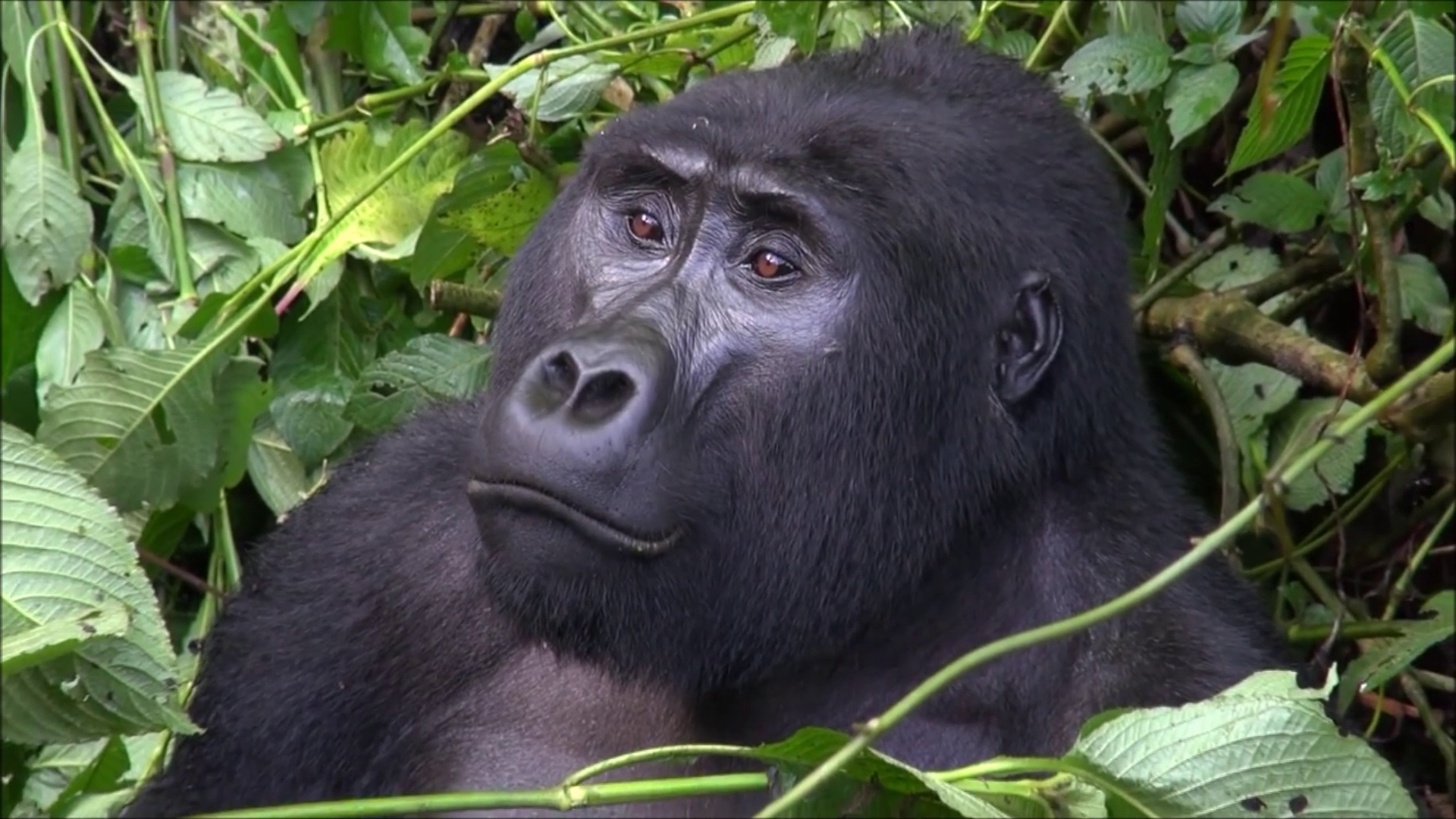 Bwindi-Mountain-Gorillas