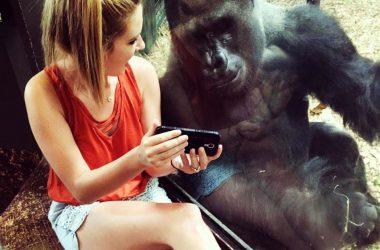 Bwindi Mountain Gorilla watching