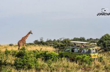 18 Days Uganda Safari, Primates Tracking, Big 5 Africa Safari