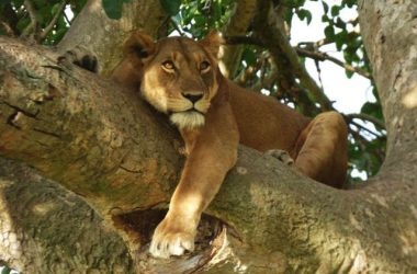 3-days-Queen-elizabeth-Mburo-National-Park-Uganda-tour