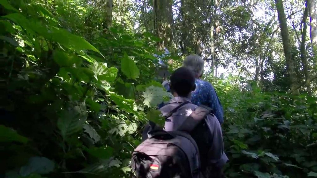 Gorilla Tracking Mgahinga National Park