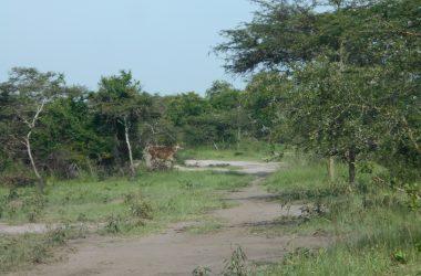 Bugungu Wildlife Reserve #