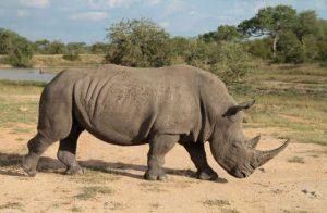 1 Day Ziwa Rhino Trekking Wildlife, Birding Uganda Safaris