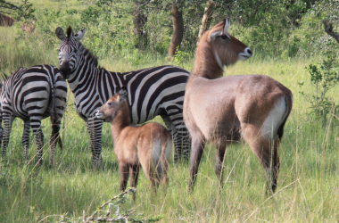 2 days mburo national park Western Uganda Safari