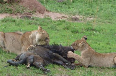 3 days Uganda safari, Kibale National Park, Queen elizabeth National Park