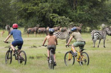 "https://gorillatripsuganda.com/wp-content/uploads/2018/01/Bicycling-Safaris-at-Lake-Mburo-National-Park-Bicycle-Tours-Uganda-300x225.gif"" alt=""Bicycling Safaris Mburo National Park, Bicycle Tours Uganda"
