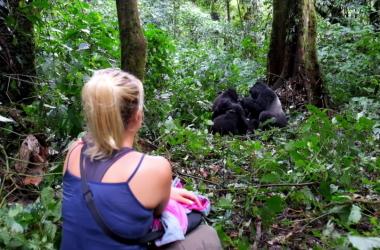 gorilla-uganda-tour-best-time-trekking