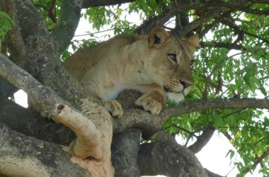 2 days queen Elizabeth national park Uganda Safari