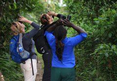 Bigodi Wetland Sanctuary Uganda Birding Safari