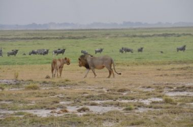 Amboseli National Park Kenya holiday destination