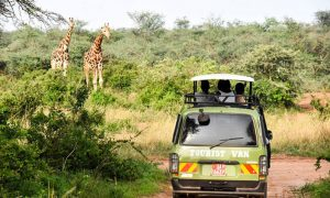 Travel from Kampala to Murchison falls National Park