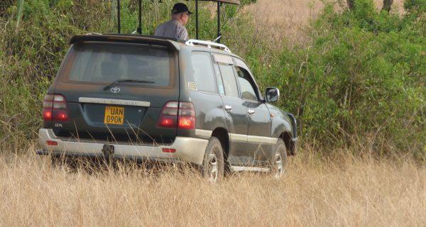 9 days Uganda Safari with rhinos, wildlife &primate tracking