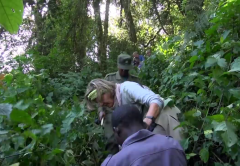 Is it safe to track Gorillas in Uganda or Rwanda or Congo