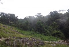 Mabira Central Forest Reserve, Getting there, What to do